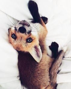 Super cute <3  Mais je trouve cette idée d'apprivoiser ces renards tellement stupide.