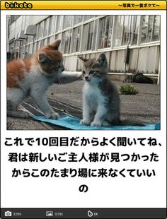 画像 Animals And Pets, Cute Animals, Crazy Cats, Funny Cute, Make You Smile, Funny Photos, Cute Cats, Funny Jokes, Dog Cat