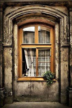 "coisasdetere: "" Um cão na janela … Provence, France. """