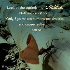 """""""Look at the optimism of nature. Nothing can stop it. Only ego makes humans pessimistic, and causes suffering."""" - Amma (Mata Amritanandamayi)"""