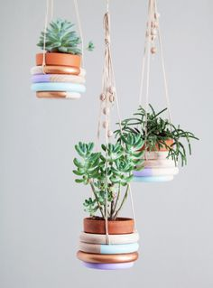 Petits portes plantes