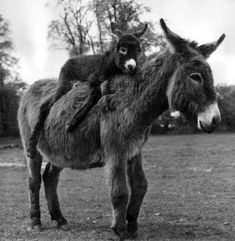 I have a big thing for mini horses... or donkeys... whatever they are...