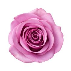 Rose Otto - the Queen of Essential Oils. #skin #skincare #gems #gemstones #cosmetics #beauty #healthy #health #healing #wellbeing #healthandbeauty #essentialoils #moisturiser #soothing #holistic #holistichealth #instagram #instamood #pure #natural #love #mindfulness #bluelotus #spa #soft #touch #luxury