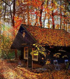 Autumn forest cabin,