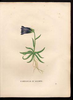 1828  v.1 - La flore et la pomone francaises -  by Jaume Saint-Hilaire - Biodiversity Heritage Library