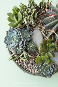 A stunning combination of succulents with a coordinating top dressing