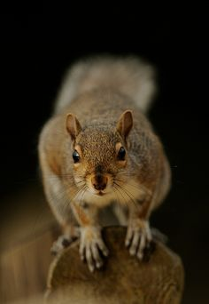 Squirrel by Benjamin Joseph Andrew