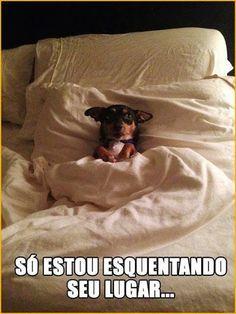 Lembrando que ele não tem pulgas, se quer ter animal tem que cuidar. ..www.dedetizadoratserv.com.br