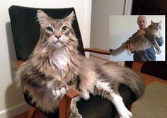 Wulfie The Big Kitty