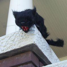 Horror Black Cat Eyes Light Up Screech Scary Creepy Halloween Haunted House Prop | eBay