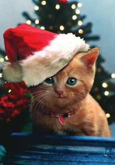 (AHA)   Santa Kitty - Wishing you all the little joys that the Christmas season brings