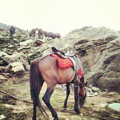 #kashmir #paradise in #india #horse