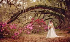 Magnolia Plantation & Gardens Oak and Spanish moss a must...