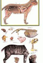 recortable_mamifero_c_p Animal Anatomy, Interactive Notebooks, Paper Dolls, Montessori, 1, School, Kids, Editorial, Color