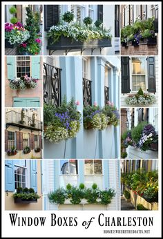 I'm taking you back to Charleston, South Carolina today and sharing some photos of beautiful wrought iron gates, glimpses into courtyard gardens and some of the church steeples … Window Box Flowers, Window Boxes, Flower Boxes, Window Ideas, Charleston Gardens, Charleston Homes, Charleston Style, Window Planters, Planter Boxes
