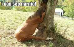 I found Narnia!