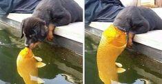 Puppy Kissing A Fish Inspires A Hilarious Photoshop Battle (10+ Pics) https://plus.google.com/+KevinGreenFixedOpsGenius/posts/Bc6CP73HYkv