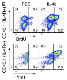 IL-4 directly signals tissue-resident macrophages to proliferate beyond homeostatic levels controlled by CSF-1 Jenkins et al. 2013. Journal of Experimental Medicine. http://jem.rupress.org/content/210/11/2477.abstract