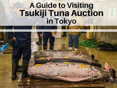 We've put together this guide with everything you need to know if you're planning a trip to the Tuna Auction at the Tsukiji Fish Market in Tokyo Asia Travel, Japan Travel, Tokyo Guide, Tsukiji, Cultural Events, World Cultures, Day Trips, Travel Guides, Tuna
