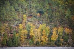 #ChickPicotheDay! (Day 2,146) The #cliff I like across the lake from us. Nice spot for a paddle. #Birch #Pine #Cedar #Rocks #Autumn #Fall #BaptisteLake #StudioNorth #BrantfordPhotographer #CanonGirl #KayakCameraGirl #Fridaythe13th