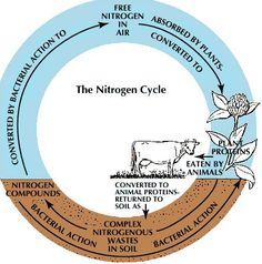 The Nitrogen Cycle is close to the carbon cycle but slightly different for instance, 78% of our atmosphere is nitrogen and if less is becoming AIR and more carbon, then nitrogen fixation, the turning from useless nitrogen in the air into oxygen so we can actually use it.