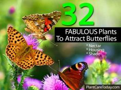 32 Fabulous Plants To Attract Butterflies