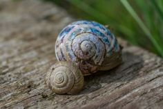 Snail Shells 31.08.13 | Flickr - Photo Sharing!