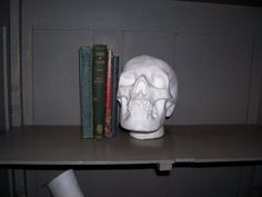 SALE Vintage Plaster casting of  skull by trufflepigtreasures, $22.00