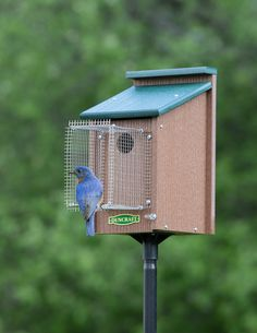 Bluebird House with Pole & Noel Guard Bird House Feeder, Diy Bird Feeder, Bluebird Nest, Bluebird Houses, Bluebird House Plans, Bird House Kits, Bird Houses Diy, Bird Aviary, Bird Boxes