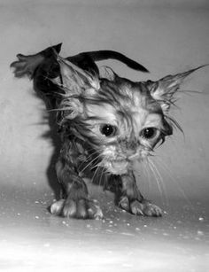 Bathing a cat should not be taken lightly. You could get hurt, your cat could be traumatized and your house could end up a disaster area.
