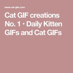 Cat GIF creations No. 1 • Daily Kitten GIFs and Cat GIFs