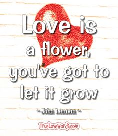 Love is a flower you've got to let it grow. ~John Lennon~ #love #lovequotes #loveit
