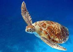 Turtle Island - top dive resort in Fiji.