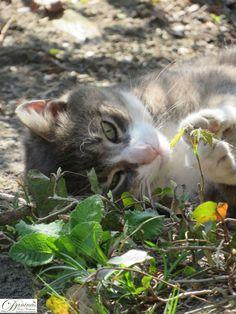 Katze Pauli genießt den Frühling im Garten Ferret, Cats And Kittens, Animals, Logo, Flower Pictures, Landscape Pictures, New Adventures, Oil Painting On Canvas, Cuddle