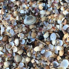 #shells #low tide #peaceful