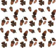 Acorns - Woodland Collection  gollybard