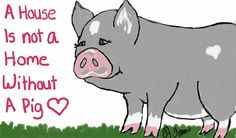 Awww I need a pig <3
