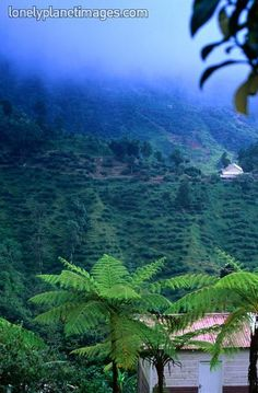 The blue mountains of Jamaica     The back of Newcastle