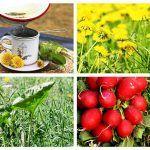 Img Metabolism, Fruit, Vegetables, Drinks, Eat, Food, Plant, Drinking, Beverages
