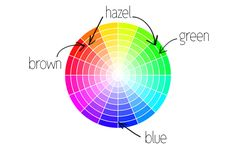 Where do Eye Colors Fall on the Color Wheel?