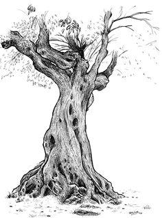 dessin de l 39 arbre tude de crayon par paintbylayers sur etsy arbre pinterest crayons. Black Bedroom Furniture Sets. Home Design Ideas