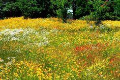 Field of flowers!