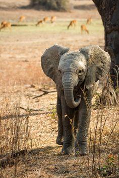natures-paintbox: Baby Elephant by Martin Abela on Fivehundredpx