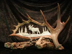 moose antler - Me: just caught a glance of this at first - inspired me to: just transfer an image onto antler.