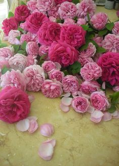 ~ overflowing with old Bourbon roses…Madame Issac Perrier and Madame Ernest Calvat…