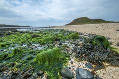 Coral beach Coral, Beach, Scotland, The Beach, Beaches