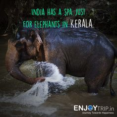 Kerala, a state on India's tropical Malabar Coast, has nearly 600km of Arabian Sea shoreline. It's known for its palm-lined beaches and its backwaters, a network of canals popular for cruises. Its many upscale seaside resorts include specialists in Ayurvedic treatments.