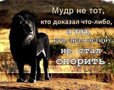 Фотография Horses, Movie Posters, Animals, Friends, Amigos, Animales, Animaux, Film Poster, Animal