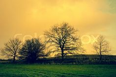 Stock image of 'Tree silhouettes in sunrise landscape'