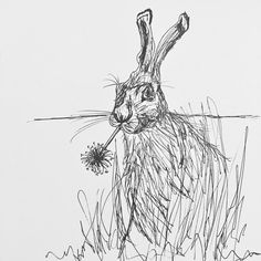 Sketch of Harold the Hare